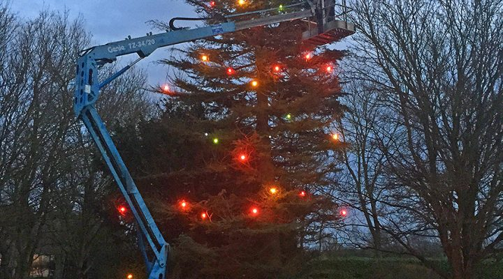 Installing Christmas lights in a garden