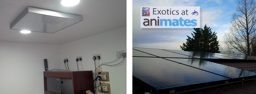Electric works at exotic pet centre